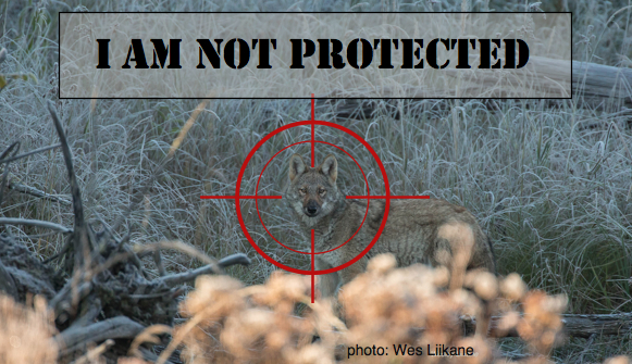 I am not protected